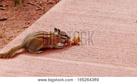 A small red-brown chipmunk during feeding at a resting place