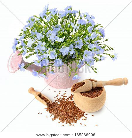 flax seeds and flowers isolated on white background