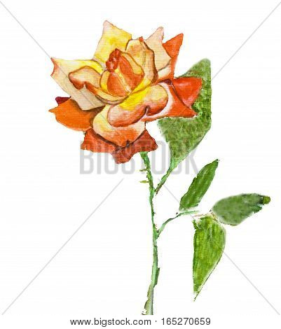 Hand painted picture watercolours - rose mixed yellow and red colours kind Gloria Dei another name Peace rose . poster