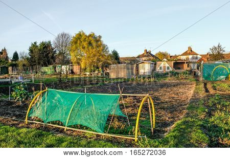 Allotment is a small plot of land which is rented and you can grown your own vegetables. Its a social life and a community of like minded people. This is an autum shot and the plots are quite empty.