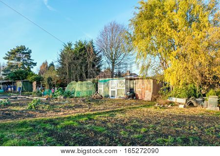 Allotments in autumn. Shot in the fall in November of an allotment plot with sheds cloches and trees.