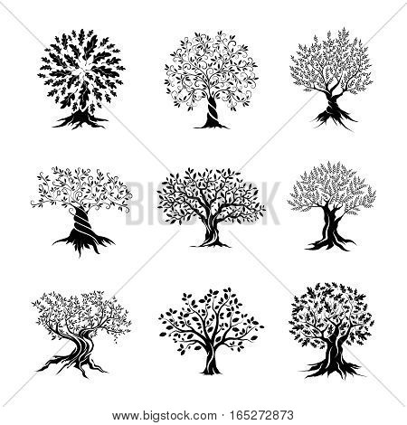 Beautiful oak trees silhouette set isolated on dark white. Web infographic modern vector sign. Premium quality illustration logo design concept.