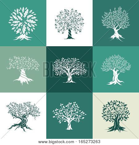 Beautiful magnificent olive and oak trees silhouette isolated on color background. Web infographic modern vector tree sign. Premium quality illustration logo design concept pictogram set.