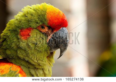 Parrot Sitting And Looking At You