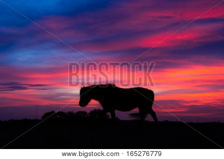 New Forest pony silhouetted in wind in front of sunset. Wild horse in front of impressive sky at Stoney Cross in a national park in the south of England UK