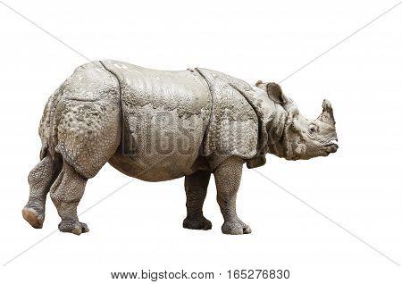 photo of Indian rhinoceros isolated on white background