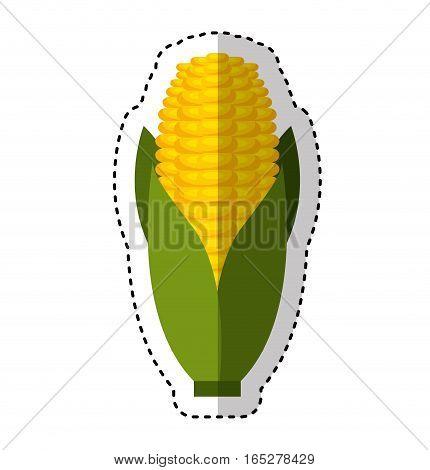 cob corn isolated icon vector illustration design