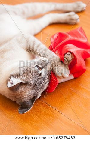 Kitty Laying On The Floor Playing With Santa Hat