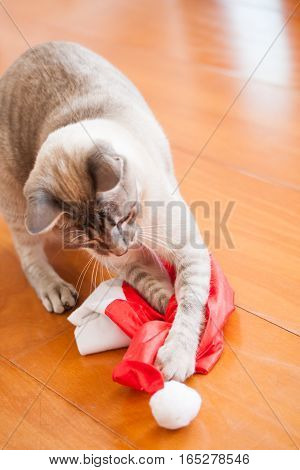 White Cat Plays With Santa Hat