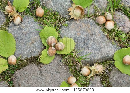 Whole hazelnuts with leaves on the stones. Background