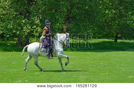 SAFFRON WALDEN, ESSEX, ENGLAND - JUNE 05, 2016: Man in Elizabethan costume  on a white  horse galloping  in front of trees.