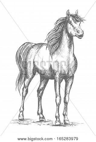 Horse mustang or young foal vector sketch. Wild or farm proud stallion standing on ground with lifted head. Symbol for equestrian racing sport, horse riding races club or equine exhibition poster