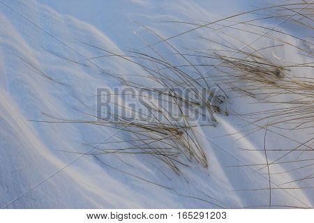 Ripples in drifts of snow. Grass growing out of the snow. Michigan