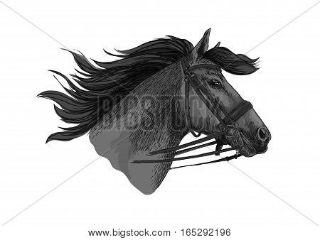 Horse in bridle running on races. Mustang trotter racing vector sketch. Stallion head symbol for sport horserace. equestrian races riding club, equine farm or ranch exhibition or contest