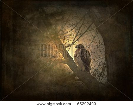 red-tailed hawk on tree limb in morning sun glow with grungy texture overlay