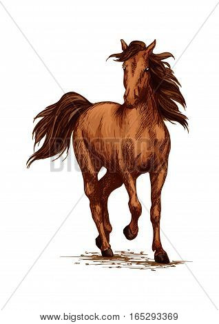 Racing or running horse. Arabian brown mustang galloping or trotting on sport races. Vector sketch farm or ranch stallion foal vector sketch. Symbol for equestrian horserace riding club, equine exhibition or contest