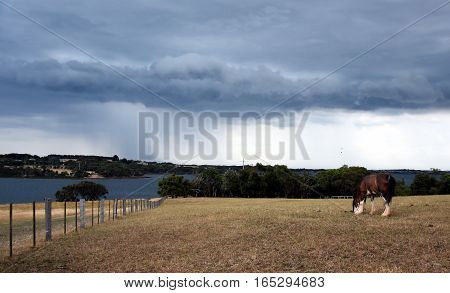 Horse eating grass on Churchill Island Heritage Farm (Victoria Australia). Dramatic clouds and storm above Philip Island in the background.