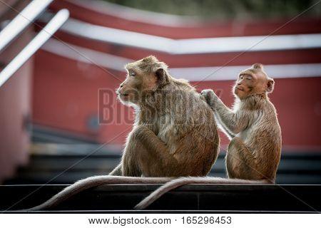 Image of Happy Monkey sitting on nature background.
