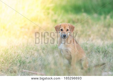 Puppies with sad eyes on nature background.