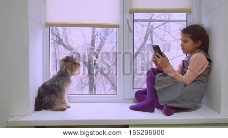 girl teen playing web online game for smartphone and dog sitting on pet window sill windowsill