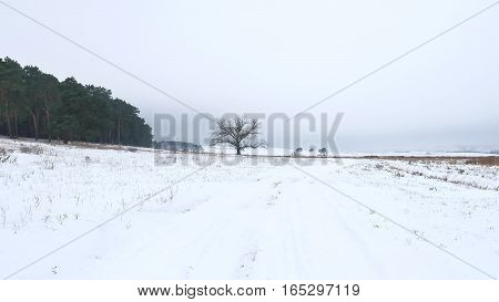 forest trees christmas tree, snow frost cold landscape nature winter