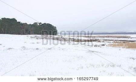 trees forest christmas tree, snow frost nature cold landscape winter