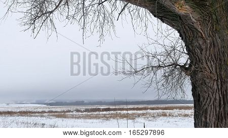 dry grass marsh winter reed beautiful cold nature landscape