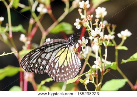 Butterfly beautiful color insect bug garden outdoor daylight