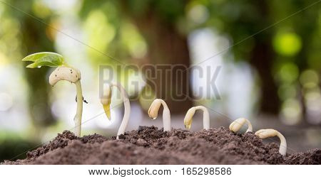 Seed to tree, Seeding, Plant seed growing concept, Growing plants. Plant seedling. young baby plants growing in germination sequence on fertile soil with natural green background