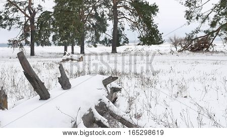trees forest christmas nature tree, snow frost cold winter landscape