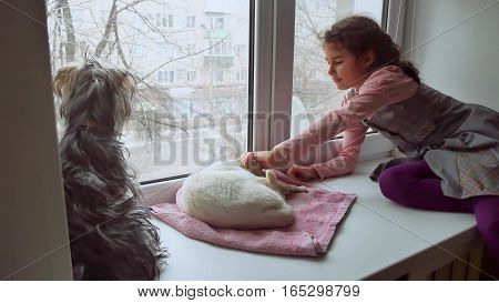 girl teen and pets cat and dog looking pet out the window, cat sleeps