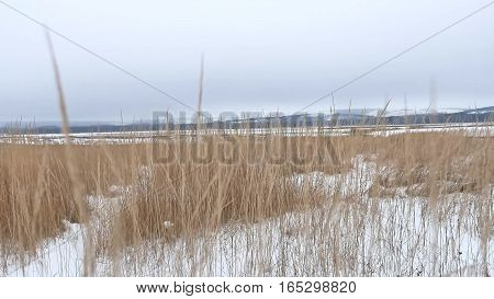 dry grass field winter snow winter landscape nature