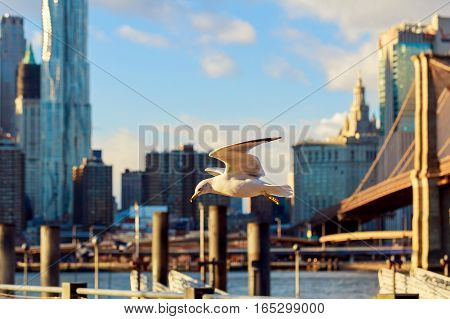 Cormorants Flying In The Background Of Brooklyn Bridge  Over