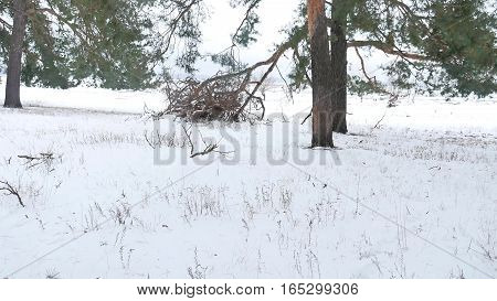 trees nature forest christmas tree, snow frost cold landscape winter