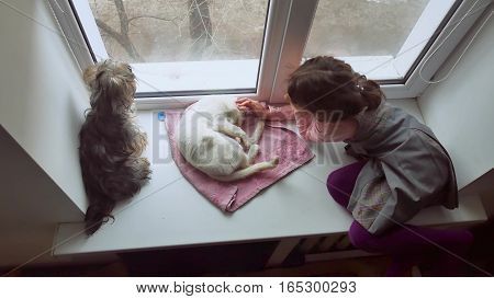 girl teen and pets cat and dog pet looking out the window, cat sleeps