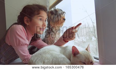 girl teen and pets cat and dog looking out window, pet the cat sleeps