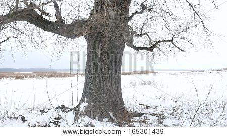 dry grass marsh winter reed nature beautiful cold landscape