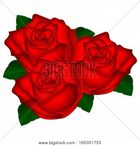 bouquet of red roses on a white background vector illustration of flowers