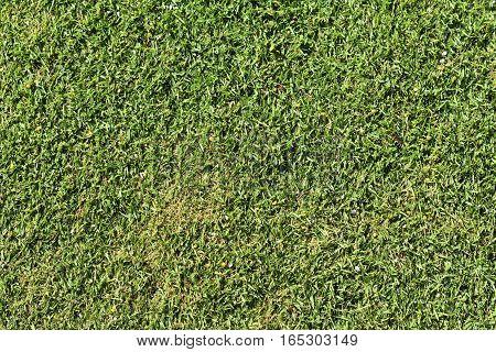 close up of fresh natural green grass