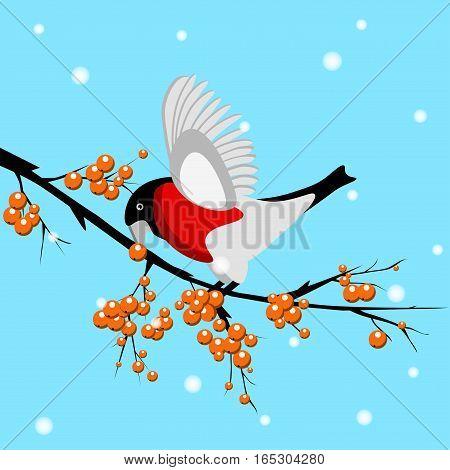 A vector bullfinch bird eating a rowan berry on the blue background with falling snow