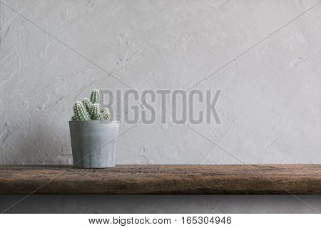 Cactus Flower On Wood Wall Shelves Modern Interior Background Concept.