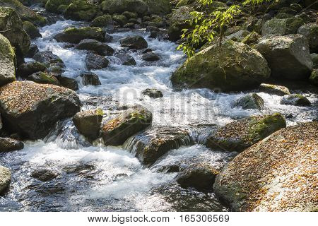 Brook flowing through a surrounded with fallen leaves on stones