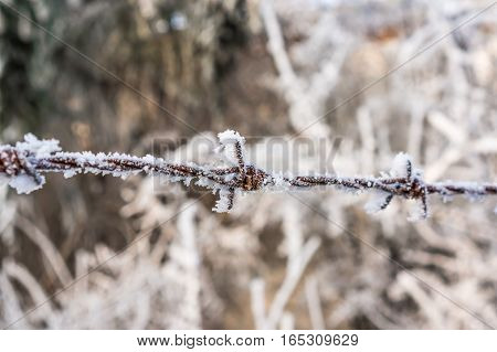 Barbed Wire Completely Covered With Frost