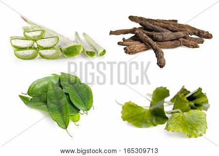 Aloe Vera Plant, Stargrass Root, Centella Leaf, And Tiliacora Triandra Isolated On White Background