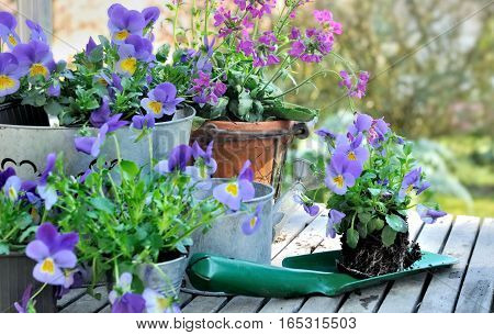 flowers on a shovel to planting in garden