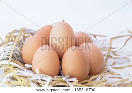 A group of chicken eggs isolated on white background.