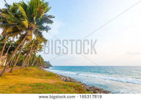 Varkala Coast Grass Palm Trees Ocean H