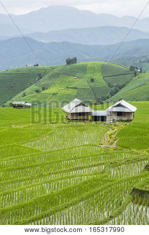 Beautiful rice terraces at Ban Pa Pong Pieng Mae chaem Chaing Mai Thailand.