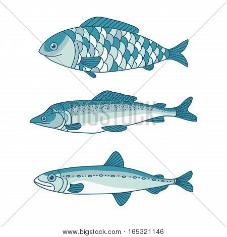 vector set of sea fish menu, fish, graphic line drawings, isolated object