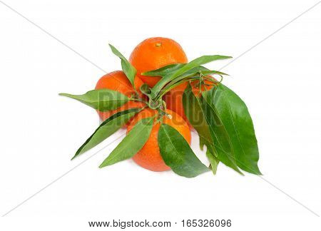 Several fresh ripe mandarin oranges with twigs and leaves on a light background